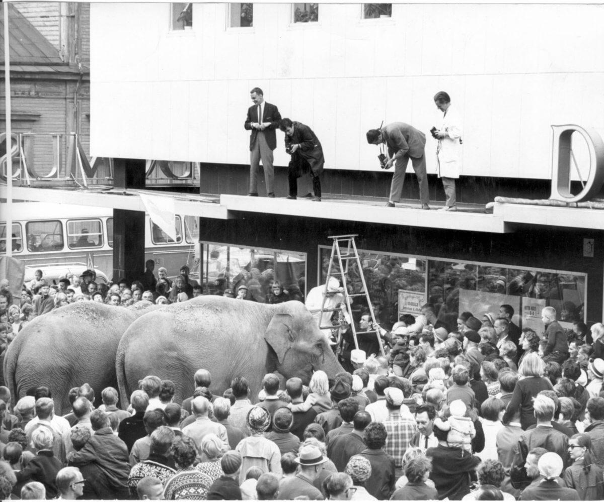 Två elefanter står framför ett varuhus i en stor folkmassa.