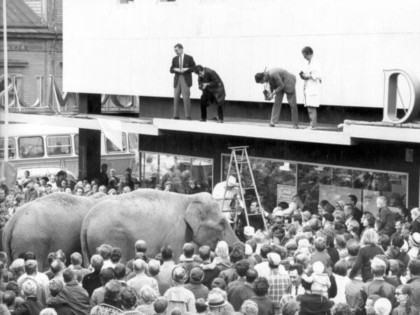 De stora elefanternas tid