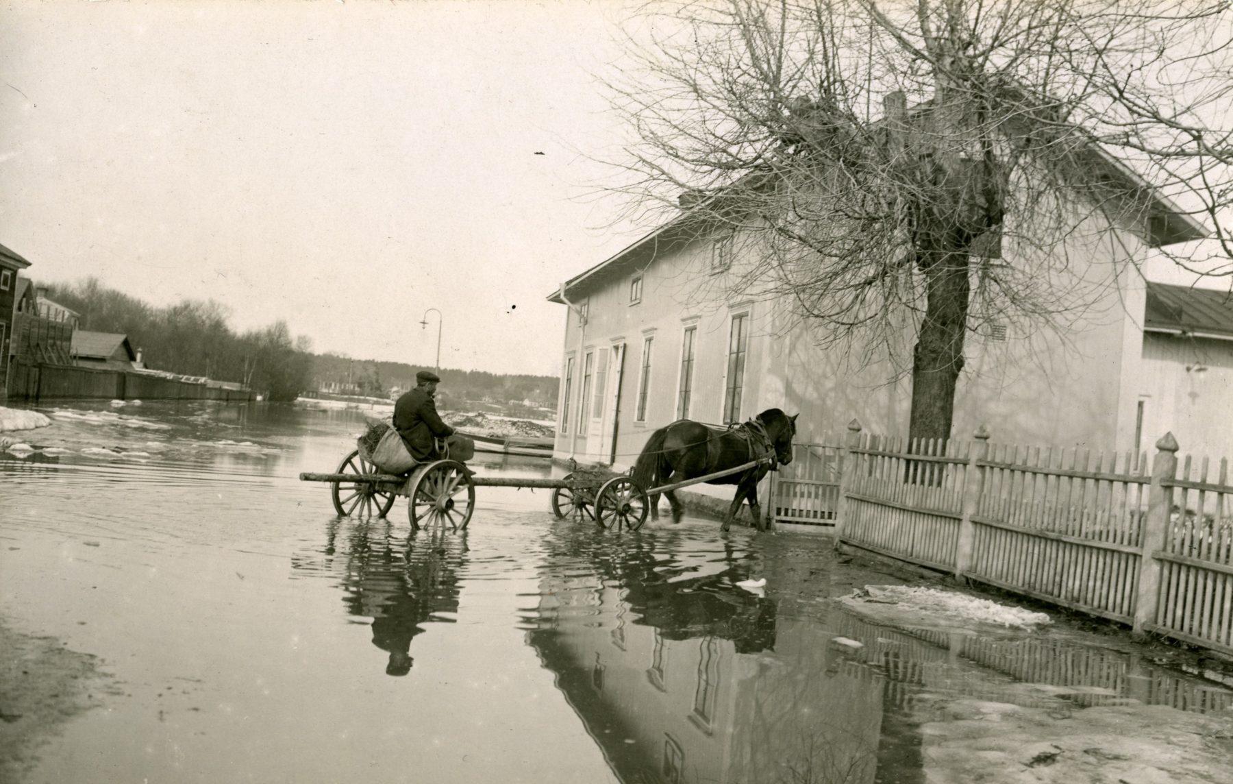 Häst i översvämmat Hudiksvall