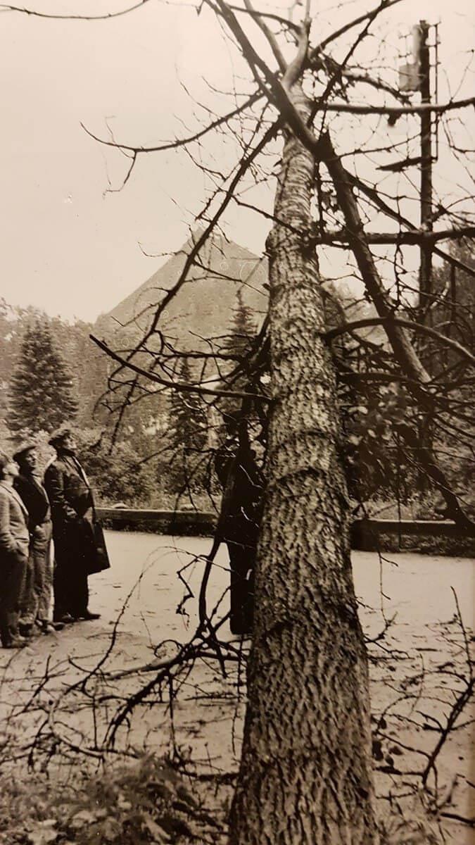 Träd som fallit