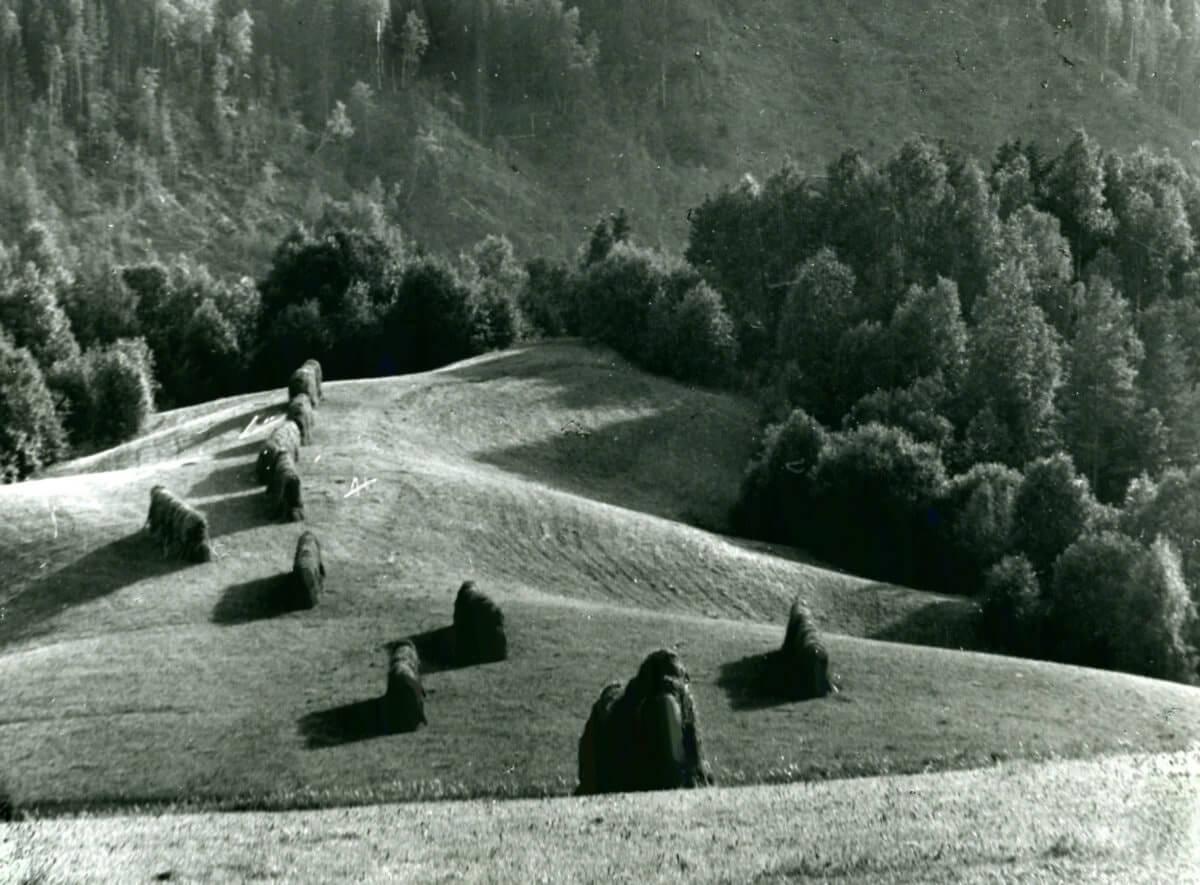 En rad höhässjor står på en åkerslänt i en dalgång.