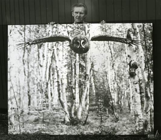 Hilding Mickelsson hållandes sin bild av attackerande lappuggla.