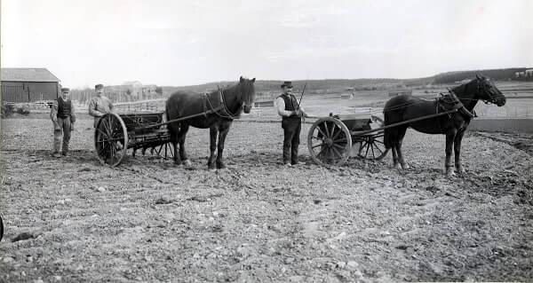Två förspända hästar i lantbruksmiljö.