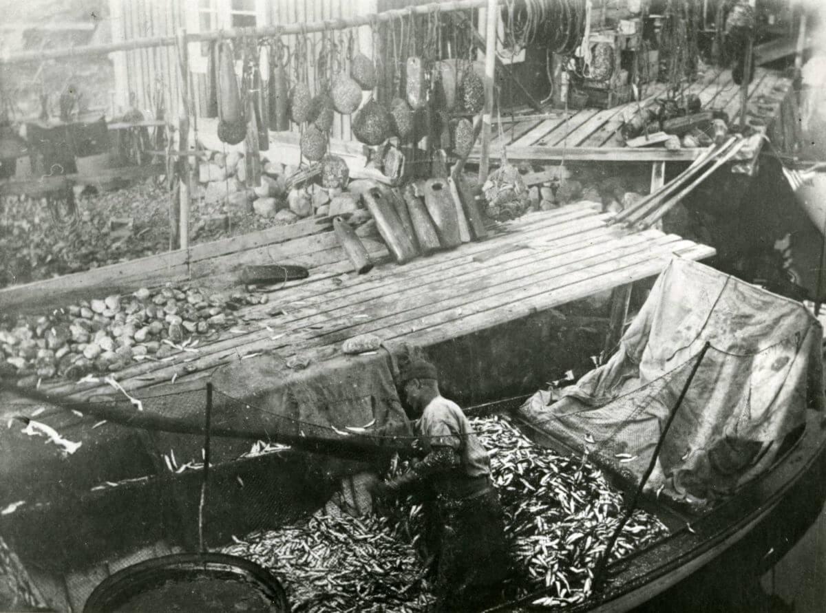 En man står i sin fiskebåt vilken är full av fångst.