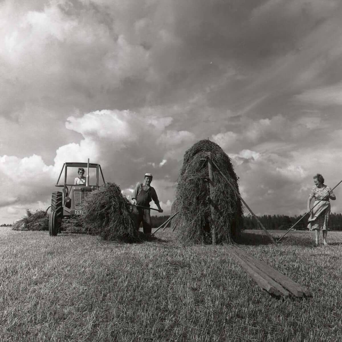 Tre personer vid slåtterarbete där en av dem kör en traktor.