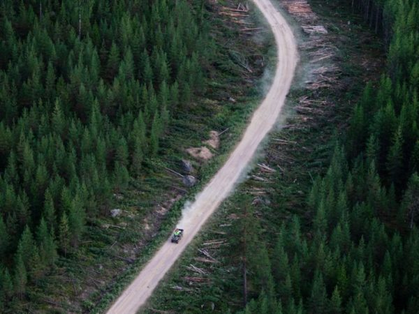 Om skog, skogsbruk och människa