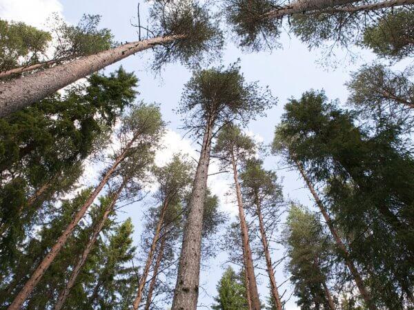 Skogen, klimatet och du